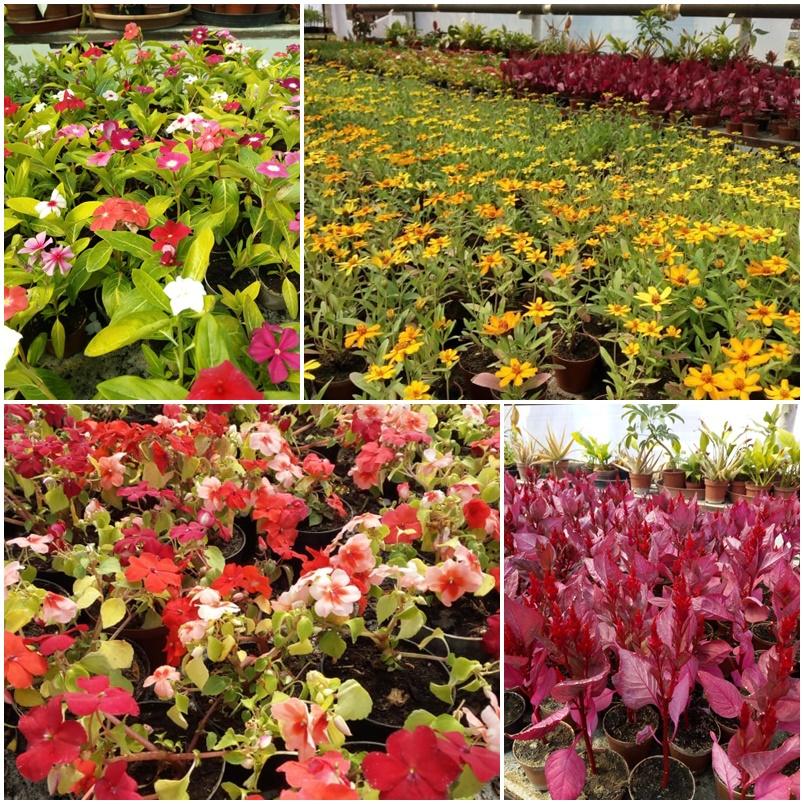 virágok mozaik